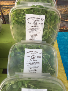 Microgreen Clamshells Pea Shoots