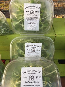 Microgreen Clamshells Sunflower Shoots