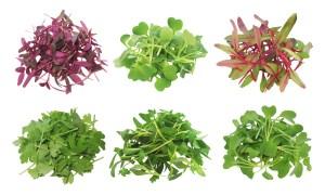 Microgreen-Piles
